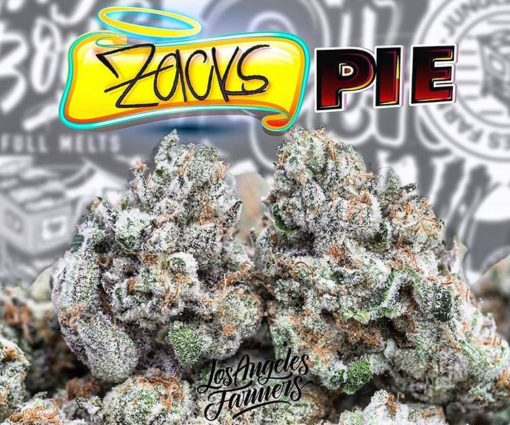 Zacks Pie,jungleboys strain | Buy Zacks Pie